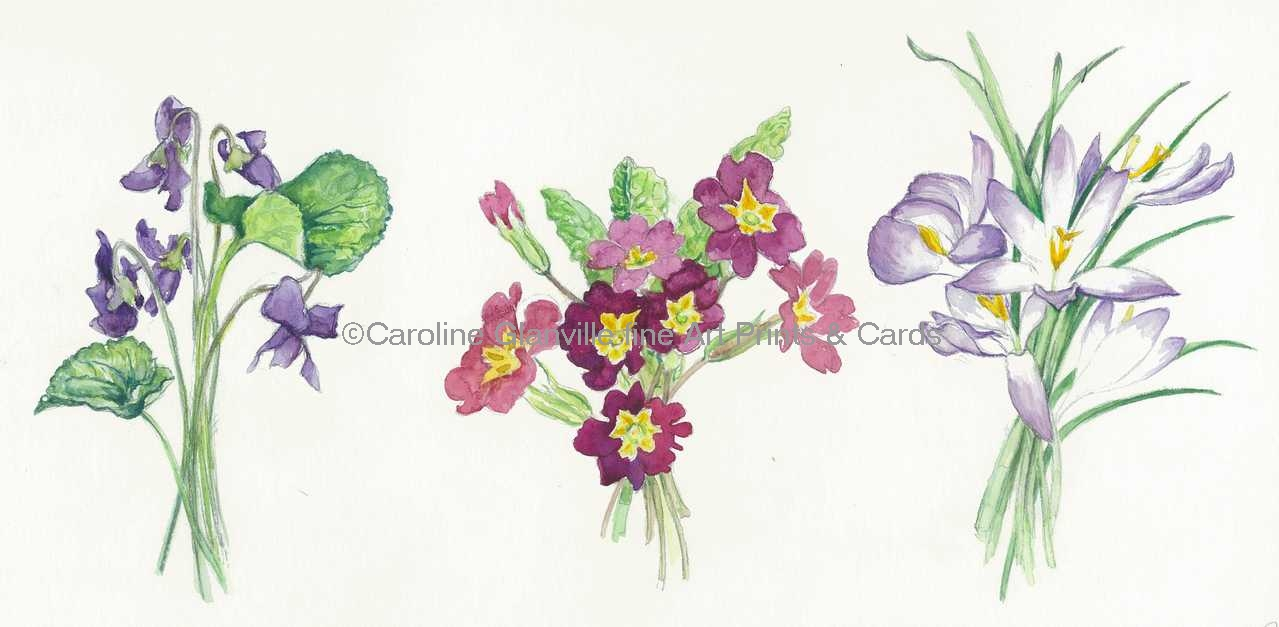 spring flower bunches, painting by Caroline Glanville