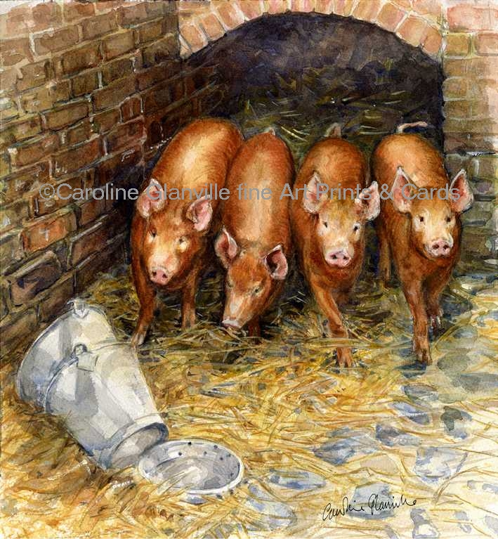 Four tamworth piglets, painting by Caroline Glanville