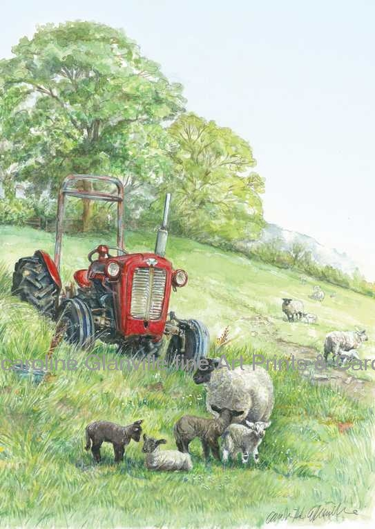 tractor with lambs, painting by Caroline Glanville