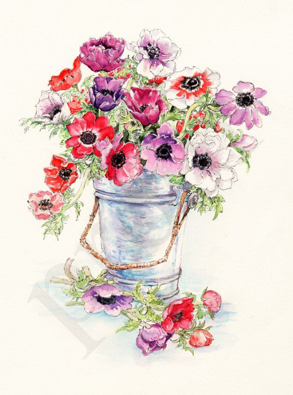 Anenomes in bucket, painting by Caroline Glanville