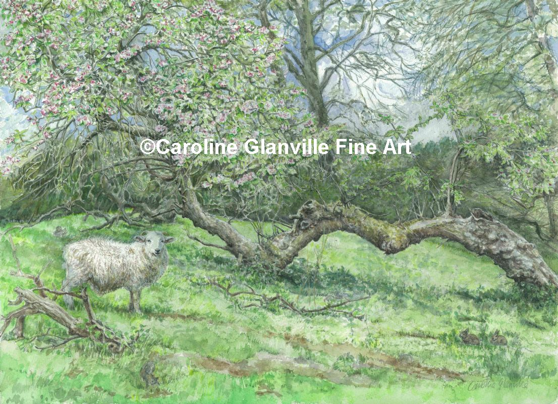 Fallen pear tree , painting by Caroline Glanville