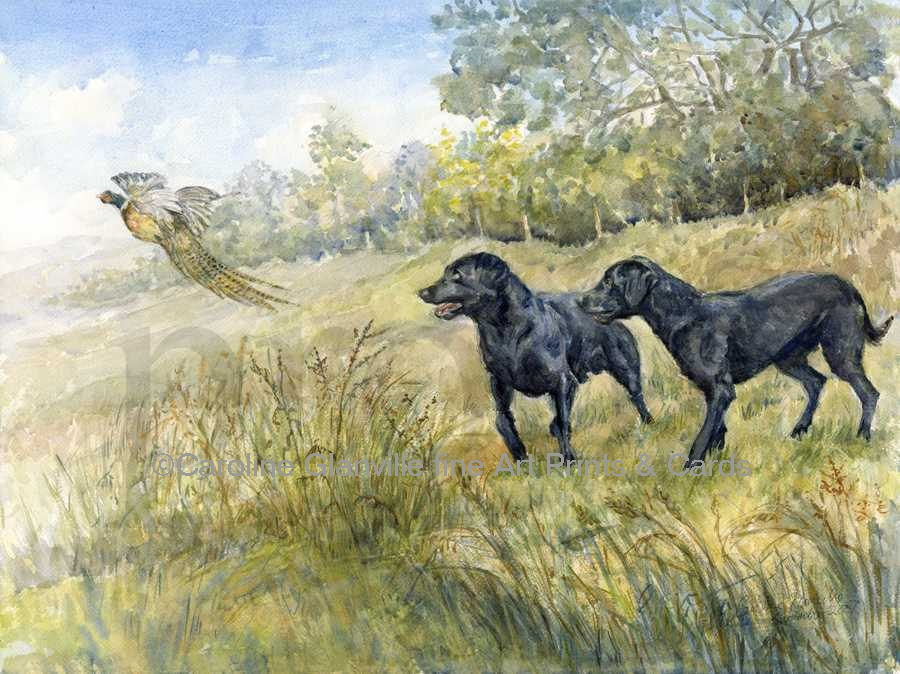 black labrador dogs, painting by Caroline Glanville