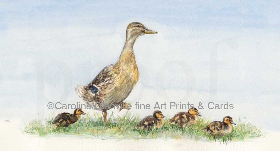Duck & ducklings, painting by Caroline Glanville