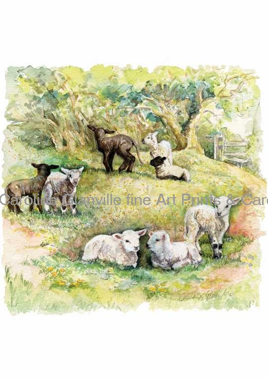 Lambs in field, painting by Caroline Glanville