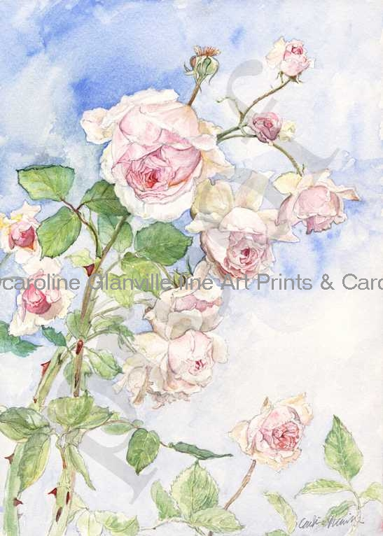 old english rose, painting by Caroline Glanville