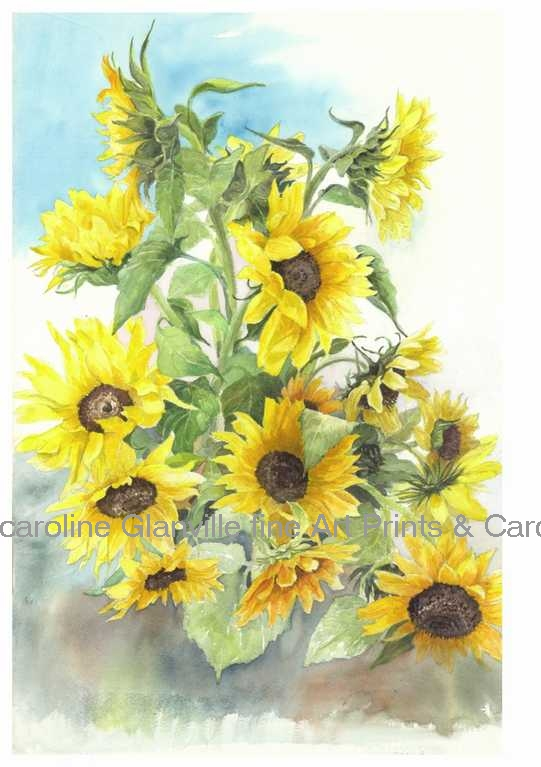 sunflowers, painting by Caroline Glanville